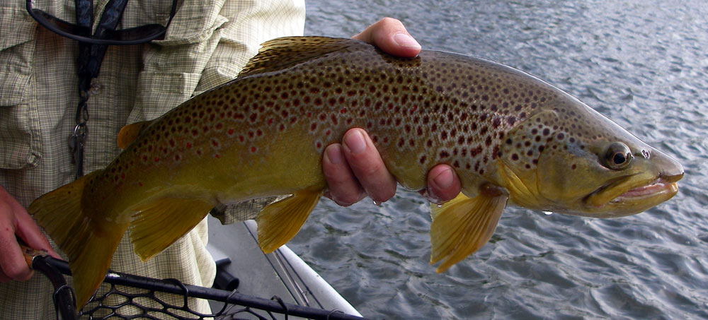Nice Summer Brown. Photo by: Tom Noble