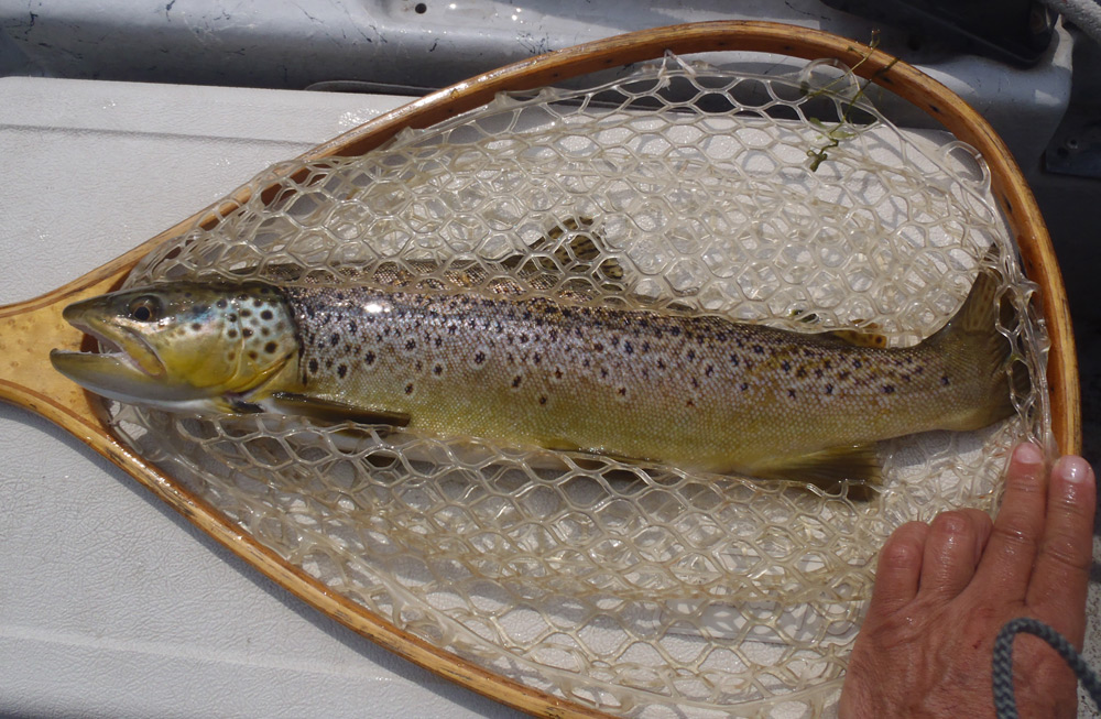 Nothing nicer than a fish that fills the net! Photo: Bruce Miller