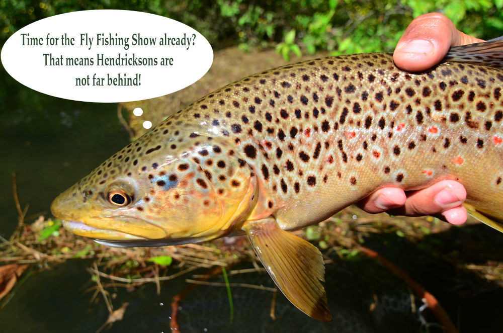 Come see us at the fly fishing show this weekend for Show me pictures of fish