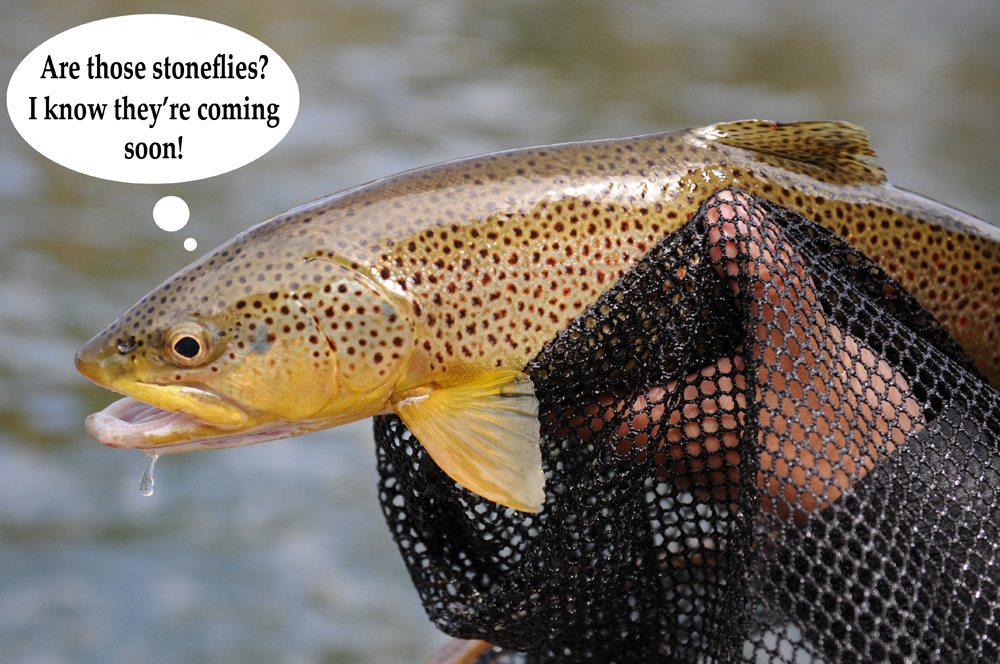 Thinking Trout