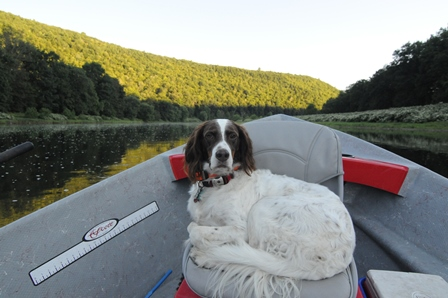 Molly taking a nice afternoon boat ride down the Main.  Photo by Bob Lewis