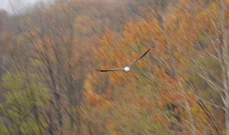 The eagle shot you end with after forgetting to check your shutter speed
