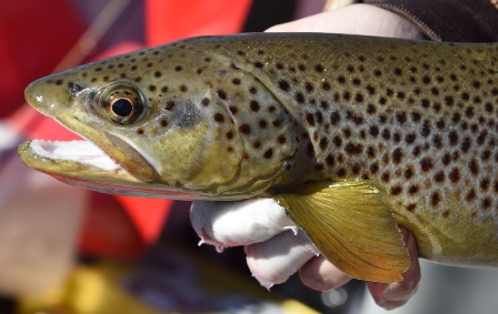 Brown close up by Bob Lewis
