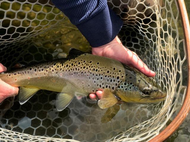 Bob Lewis releasing a good fish