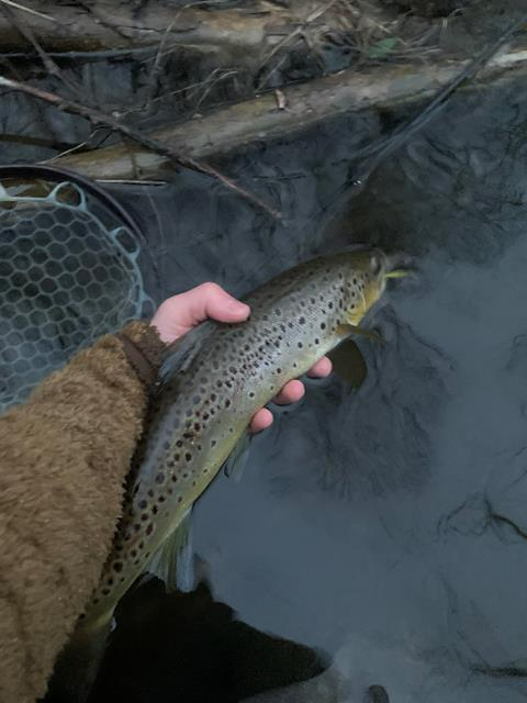 Daniel with a good streamer eater from the Croton watershed