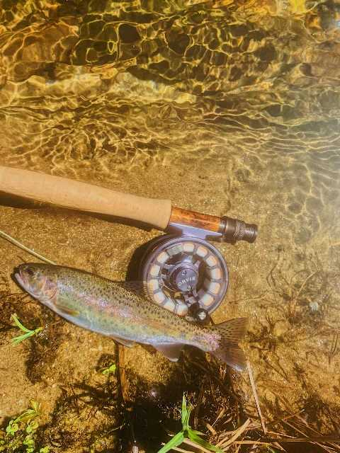 Radford is fishing local and sent us this beautiful rainbow from South Carolina