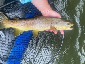 Matt Carberry found a couple of nice fish last night